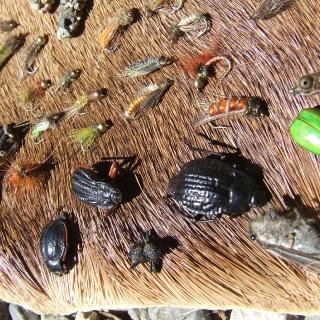 Entomologia aplicada a la pesca.
