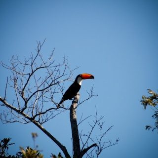 Tucan - Golden Fly fishing.