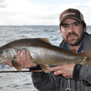 Brown trout of Puyehue - guide Javier Rosés.