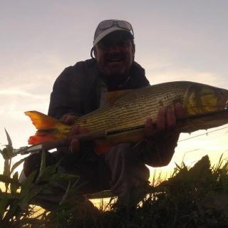 Fly fishing for Golden Dorado with Dario Arrieta