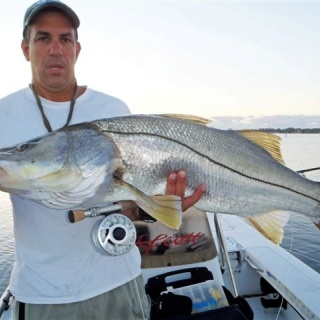 Giant Snook taken in 2 feet of water on a popper.