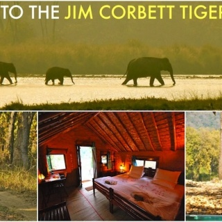 Compliment your angling adventure with a tiger safari in one of India's finest tiger reserves.