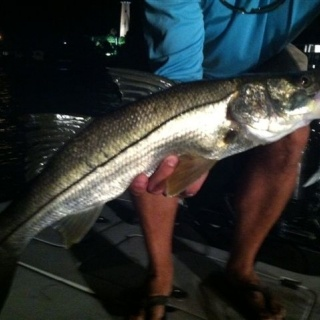 Martin w/a nice dock light Snook