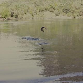 Rio Calcurrupe