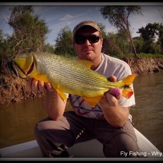 Fly fishing for Golden Dorado - Dario Arreinta
