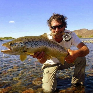 Migratory Limay brown caught by Patrick Steverlynck in December !!!!!