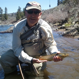 Truckee River brown trout