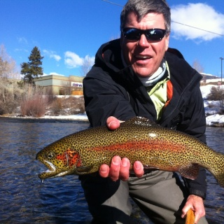 "Colorado ""Gold Medal"" Tailwater Rainbow"
