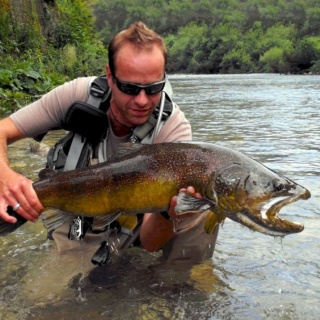 Lustrik and Marble trout, Slovenia