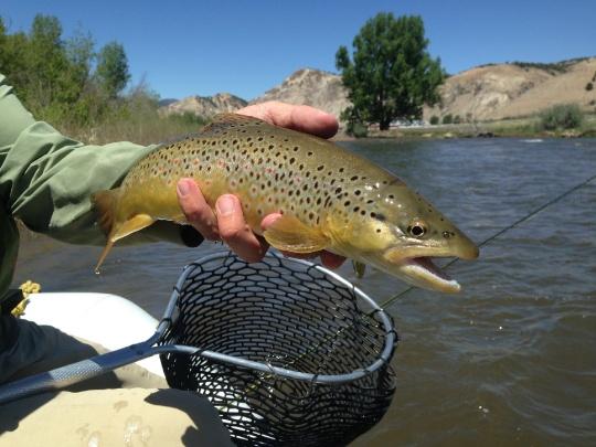 Fishing report eagle river by john cochran fly dreamers for Eagle river fishing report