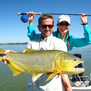 Dorado, in the tailwater fishery of the High Parana