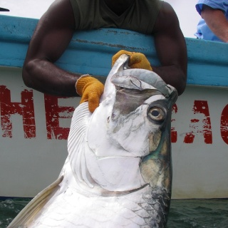 Manzanillo, Costa Rica - The Best Place to catch your first triple digit tarpon.