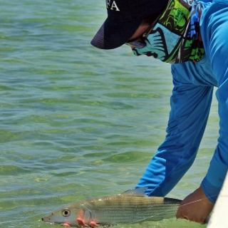 Fly Fishing for bonefish in Cozumel Island, Mexico. www.pescacozumel.com
