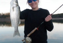 Striped bass fly fishing fly dreamers for Bull shoals lake fishing report