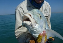 Fly-fishing Image of Golden Trevally shared by Richard Carter – Fly dreamers