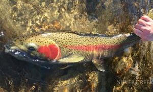 Big Lost River, Salmon River Idaho, Sun Valley, Idaho, United States