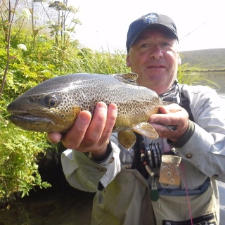 Brown trout from Laxá in Aðaldal