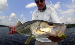 Everglades / 10.000 islands, Miami, florda, United States
