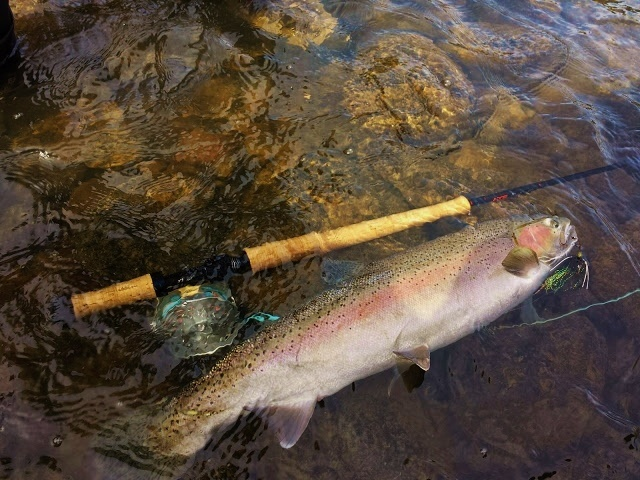 Fishing report rogue river by nate bailey fly dreamers for Rogue river oregon fishing