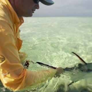 Permit Flshing - Ascension Bay Bonefish Club