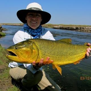 Golden Dorado from Corriente River - Pira Lodge