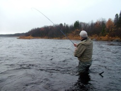 Little summary of Chavanga & Strelna salmon fishing season.