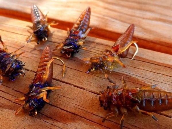 Moscas / Flies