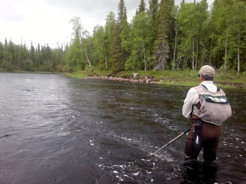 Salmon fishing in Russia. It is usually possible to see, how fishers catch with the big lateral drift of a fly. Especially it is characteristic for fishers with a two-hand rod and catching on rather far distance. After cast downwards and across a cu...
