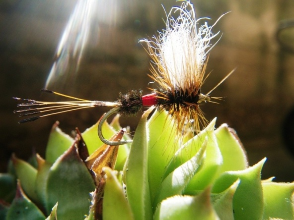 Long forgotten fly, tomorrow i'll give it a try