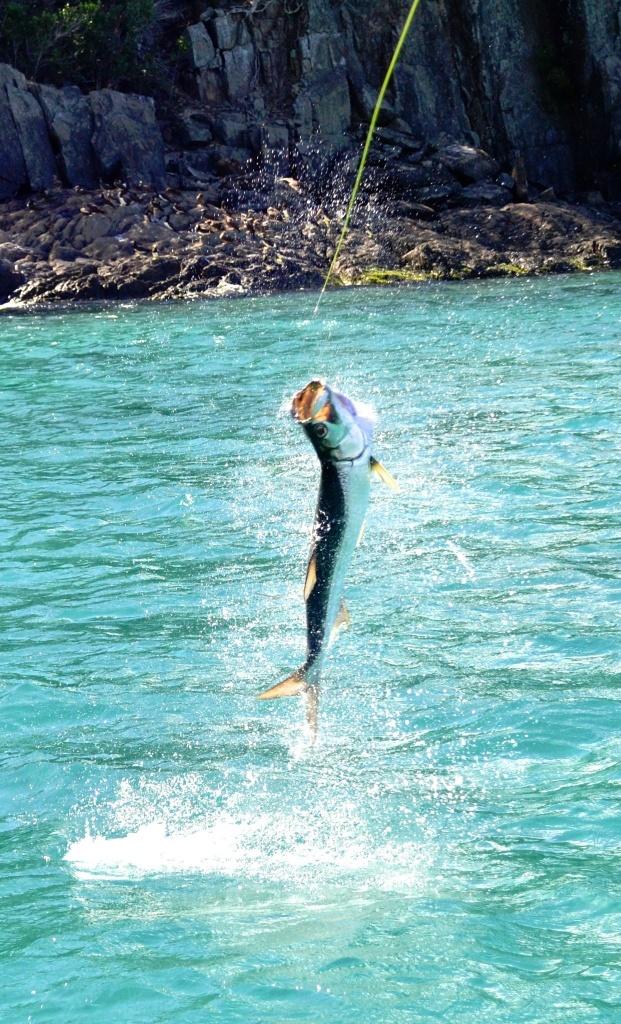 Arthur jones fly fishing guide fly dreamers directory for Virgin islands fishing
