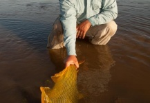 Fly-fishing Imageof Golden <strong>Dorado</strong> shared by Dario Arrieta – Fly dreamers