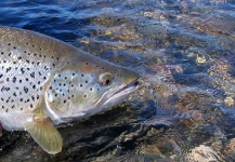 <strong>Chip</strong> Drozenski 's Fly-fishing Photo of a Brook trout – Fly dreamers