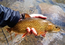 Fly-fishing Photoof Lake trout shared by Brecon Powell – Fly dreamers