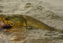 Golden <strong>Dorado</strong> Fly-fishing Situation – Chip Drozenski shared this Pic in Fly dreamers