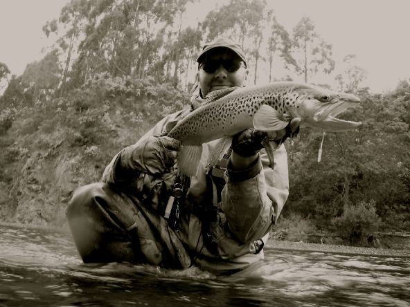 Wild New Zealand Brown Trout.