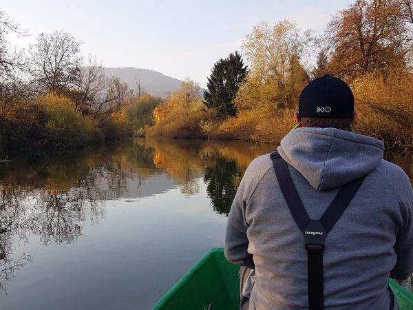 Huchen (Danube Salmon - Hucho Hucho) - Taimen