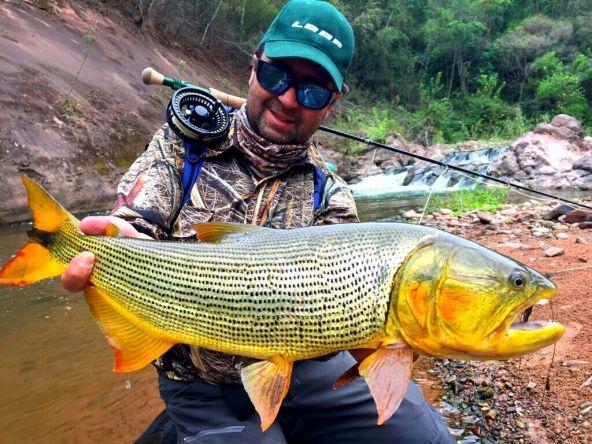 Salta province, golden dorado on the Dorado river