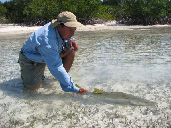 Fly fishing community fly dreamers for Robalo fish in english