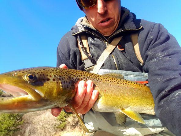 Provo river utah. Brown trout.  There are still big fish around.