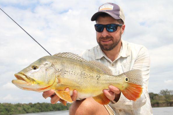 Pavon del rio Xingu, Brasil
