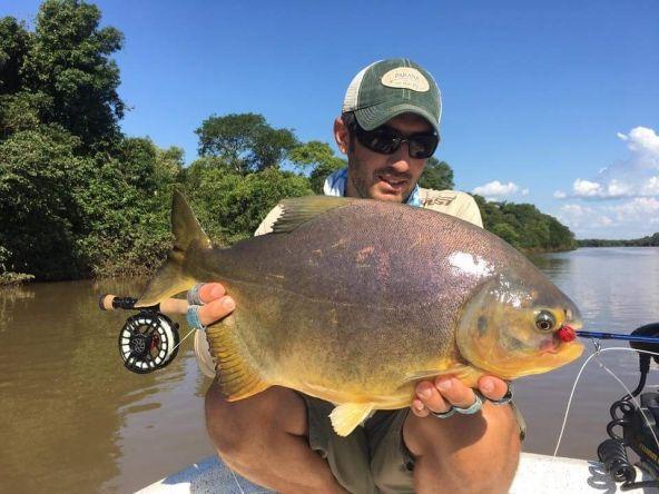 Mbiraí-Piraí  #pacú #upperparana #paranaonthefly #flyfishing #piaractusmesopotamicus #argentina #fishsimply #catchandrealese♻