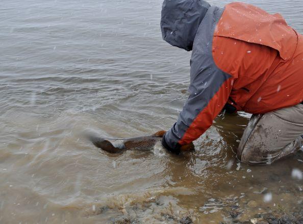 Pescando las gigantes de TDF...