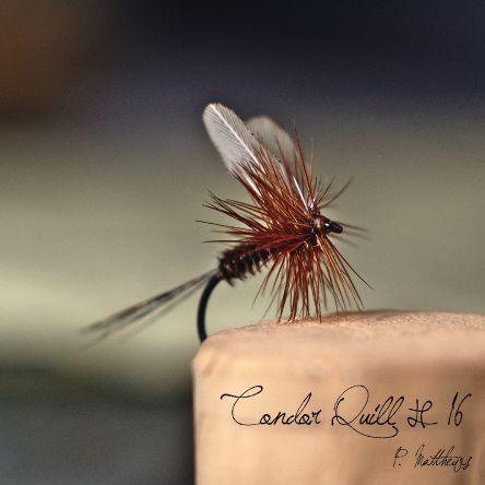 Condor Quill #16