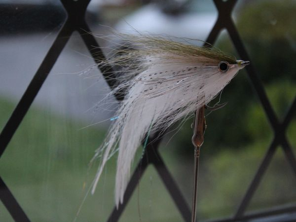 Hollow flies and flat wings