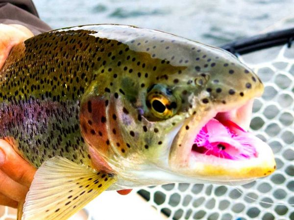 Alaska Fly fishing Float Trips in Bristol Bay and Southwest Alaska
