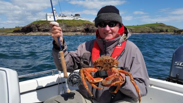 A Spidercrab on the fly in Cork Harbour, Ireland.