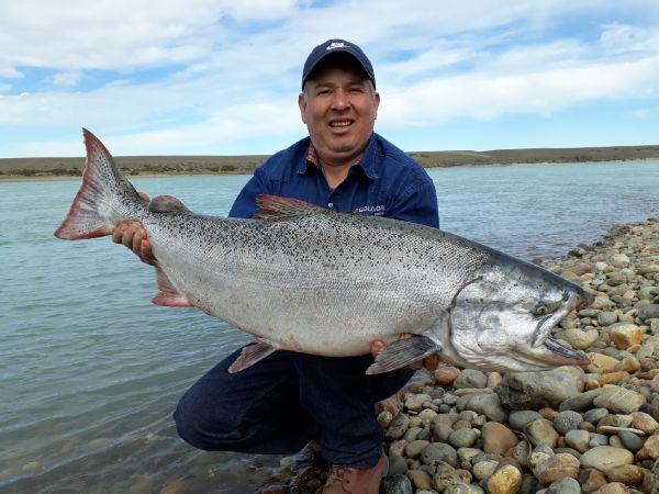 Chinook en el Rio Santa Cruz, Patagonia Argentina