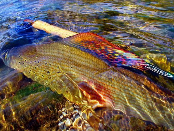 Fly fishing trip Montenegro 2020