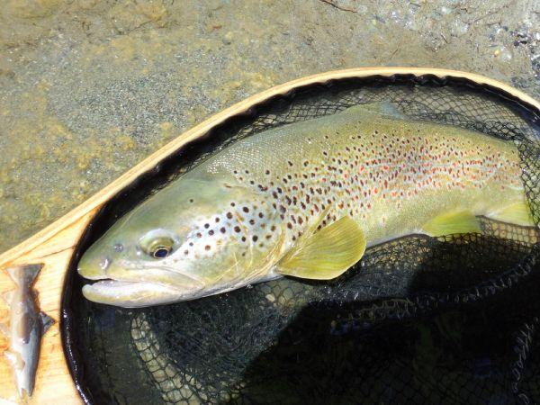 Fishing 2020
